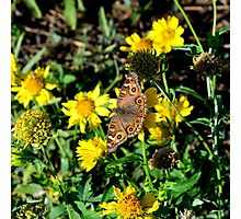 Butterfly on Yellow flower Photographic Print