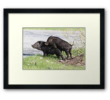 Makin' Bacon. Framed Print