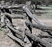 Fence by Sally Murray