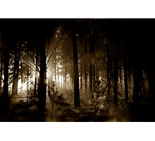 Forest mornings Photographic Print