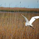 Egret On The Marsh by Gayle Dolinger
