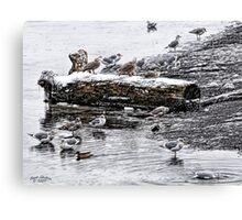 Cold Seagulls (artistic) Canvas Print