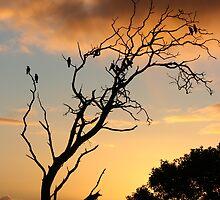 SUNSET  TREE by Paul Cavanagh