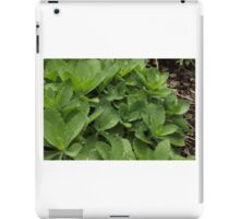Dew Drops iPad Case/Skin