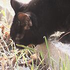 After I eat this grass I'll go in the house & puke on the rug. by Stephen Thomas