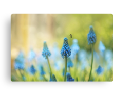 Muscari Faerie Land Canvas Print