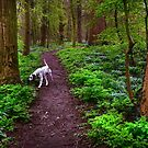 Dalmatian In the Spring Woods  by JennyRainbow