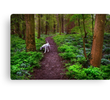 Dalmatian In the Spring Woods  Canvas Print