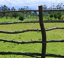 Wood Rail Fence in a Pasture by rhamm