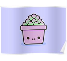 Succulent in cute pot Poster