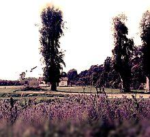 Italian Countryside by Daniela Cifarelli