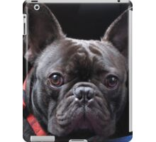 Adorbz French Bulldog