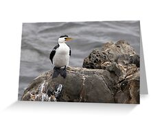 "Little Pied Cormorant ~ ""Like a Shag on a rock"" Greeting Card"