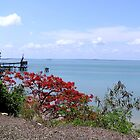 Darwin Harbour by Virginia McGowan