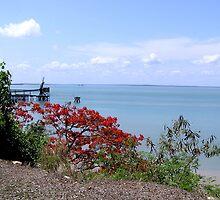 Darwin Harbour by Virginia McGowan
