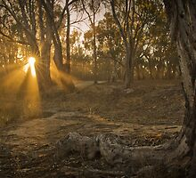 Filtered Sun Beams by daveoh