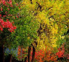 Colour  My World  by Kathryn Potempski