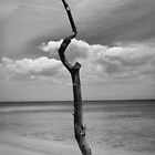 Tree trunk on the beach by Carlos Restrepo