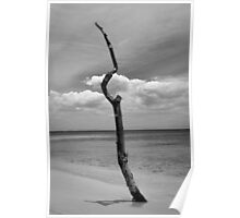 Tree trunk on the beach Poster