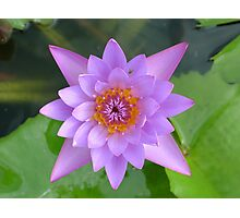 Fresh Water Lilly Flower Photographic Print