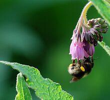 Pollen Collecter by Simon Pattinson