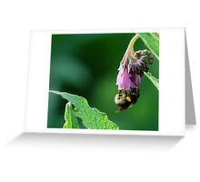 Pollen Collecter Greeting Card
