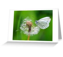 Green Veined White  Greeting Card