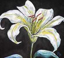 White Lily by Pamela Plante