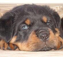 """Puppy """"Puplexed"""" by taiche"""