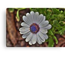 Daisy - Enhanced Canvas Print