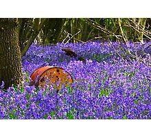 Bluebell carpet Photographic Print