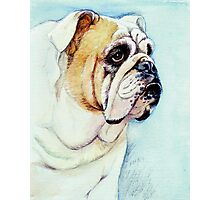 British Bulldog Photographic Print