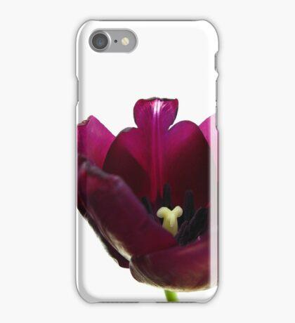 Purple Tulip Two iPhone Case/Skin