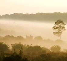 Misty morning by Rupert Ronca