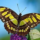 Tropical Butterfly by Bonnie T.  Barry