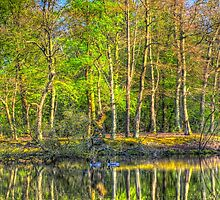 Reflections From The Pond by DavidHornchurch