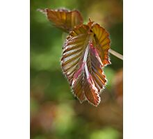 Gentle unfolding  Photographic Print