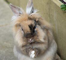 Rabbit praying by ejrphotography
