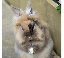 Rabbit praying Photographic Print