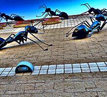 Ants by photosbyflood