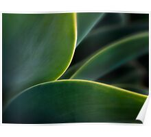 Agave curves Poster