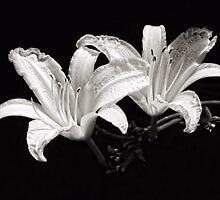Daylilies in Black and White by Sharon Woerner
