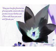 Black tulip Photographic Print