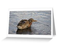 Cheeky Duck in Ever Decreasing Circles Greeting Card