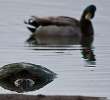 Is That A . . . Snapping Turtle? by Jay Ryser