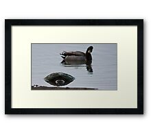 Is That A . . . Snapping Turtle? Framed Print