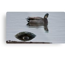 Is That A . . . Snapping Turtle? Metal Print