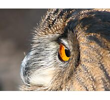 Owls eye view  Photographic Print