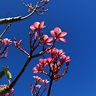 pink plumeria against the blue sky by Eliza1Anna
