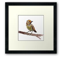 Stay Birdie Framed Print